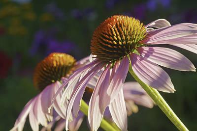 Priska Wettstein Land Shapes Series - Purple Cone Flower Echinacea by Keith Webber Jr