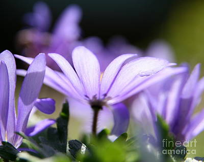 Photograph - Purple Light  by Neal Eslinger