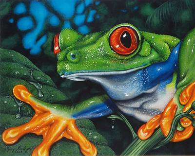 Red Eye Tree Frog Art Print by Jerry Graham