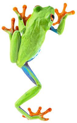 Red Eyed Tree Frog Art Print by Dirk Ercken