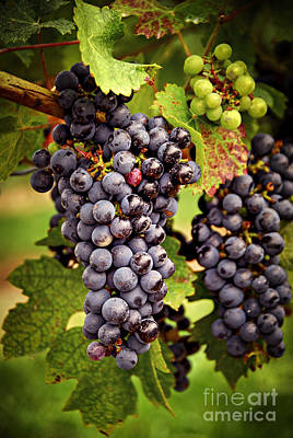 Food And Beverage Photos - Red grapes by Elena Elisseeva