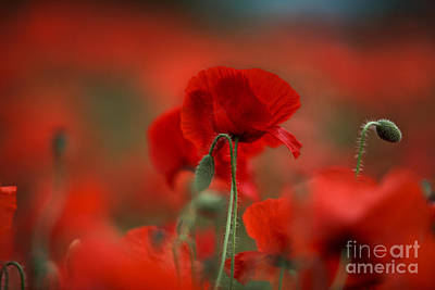 Summertime Photograph - Red by Nailia Schwarz