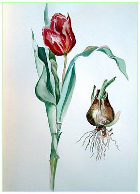Spring Bulbs Painting - Red Tulip by Mindy Newman