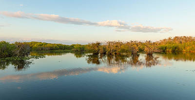 Anhinga Photograph - Reflection Of Trees In A Lake, Anhinga by Panoramic Images
