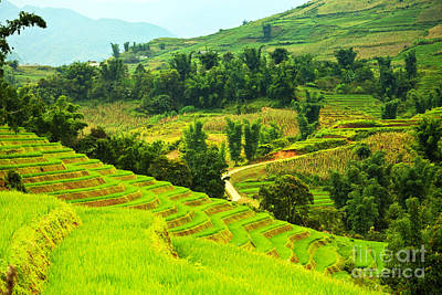 Hollywood Style - Rice field terraces by MotHaiBaPhoto Prints