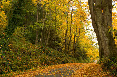 Fallen Leaf Photograph - Road Passing Through A Forest by Panoramic Images