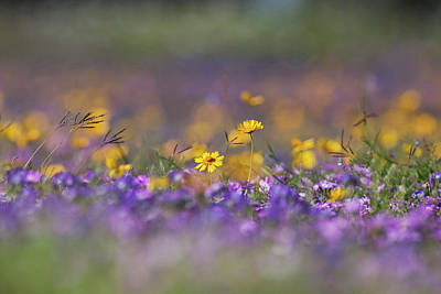 Roadside Wildflowers In Texas, Spring Art Print by Larry Ditto