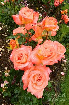 Portland Photograph - Roses by Micheal Jones