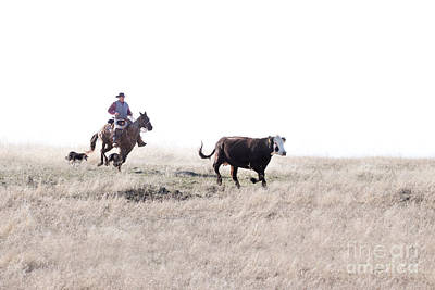 Working Cowboy Photograph - Round Up by Cindy Singleton