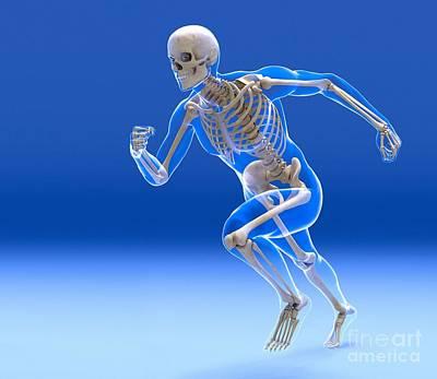 Running Skeleton In Body, Artwork Art Print by Roger Harris