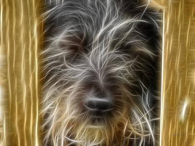 Puppies Digital Art - Sasha by Robert Orinski