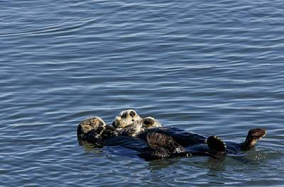 Sea Otters Art Print by Bob Gibbons/science Photo Library
