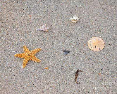 Sea Swag - Natural Art Print