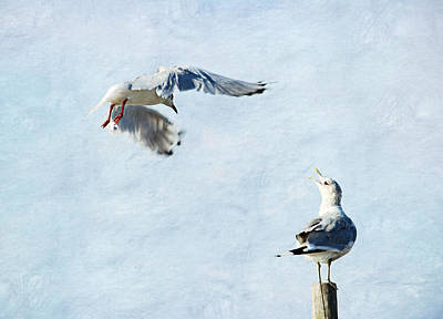 Seagull Mixed Media - Seagulls by Heike Hultsch