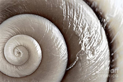 Seashore Photograph - Seashell Detail by Elena Elisseeva