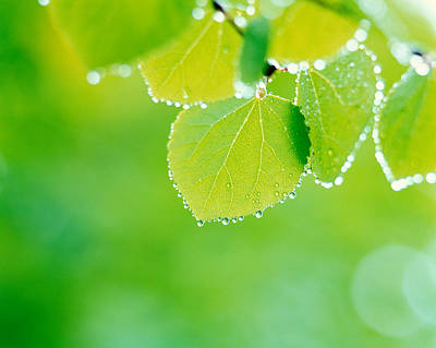 Selective Focus Close Up Of Green Art Print by Panoramic Images