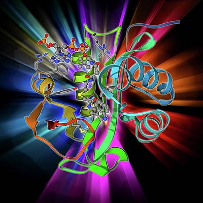 Coenzyme Photograph - Serotonin N-acetyl Transferase Molecule by Laguna Design