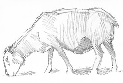 Drawing - Sheep Sketch by Mike Jory