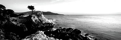 Lone Cypress Photograph - Silhouette Of Lone Cypress Tree by Panoramic Images