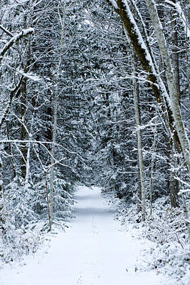 Cold Temperature Photograph - Snow Covered Road Passing by Panoramic Images