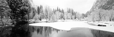 Snow Covered Trees In A Forest Print by Panoramic Images