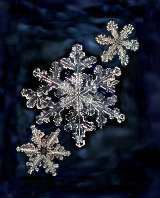 Photograph - 3 Snowflakes For The Price Of One by Lorella  Schoales