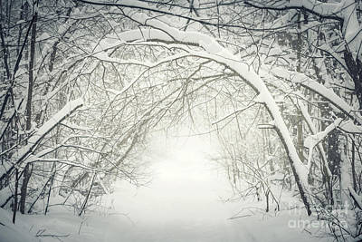 Snowy Winter Path In Forest Art Print
