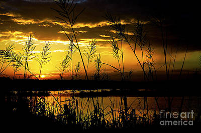 Rain Digital Art - South Carolina Sunset  by Thomas R Fletcher