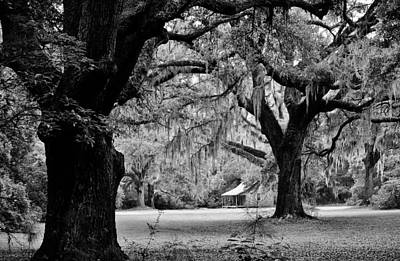 Spanish Moss Photograph by Paulette Thomas