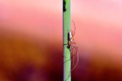 Spider Mixed Media - Spider In The Reeds  by Tommytechno Sweden