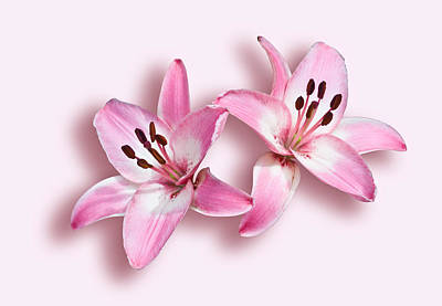 Photograph - Spray Of Pink Lilies by Jane McIlroy