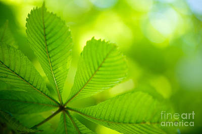 Chestnut Photograph - Spring Green by Nailia Schwarz