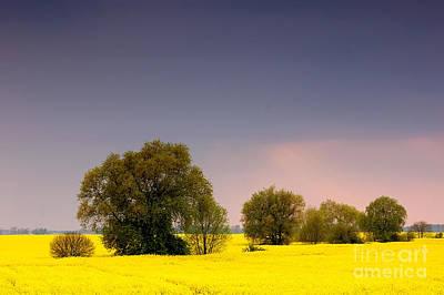Spring Landscape Art Print by Michal Bednarek