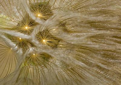 Spun Gold Art Print by Betty Depee