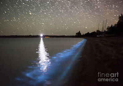 Motion Star Photograph - Star Trails And Bioluminescence by Philip Hart