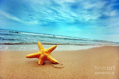 Shells Photograph - Starfish by Michal Bednarek