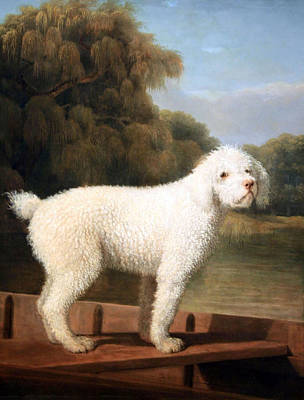 Stubbs' White Poodle In A Punt Art Print