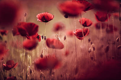 Red Photograph - Summer Poppy by Nailia Schwarz