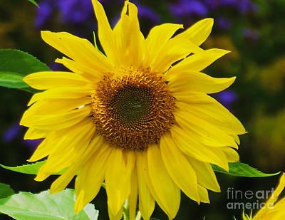 Photograph - Sun Flower by William Norton