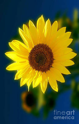 Photograph - Sunflower by Peter Piatt