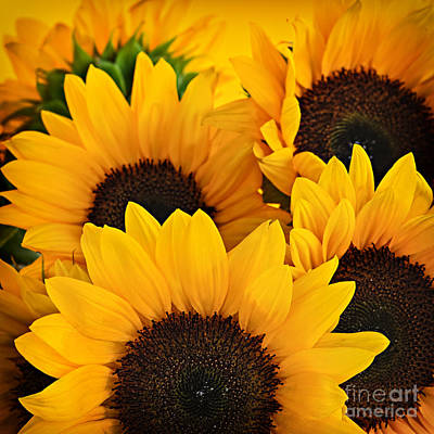 Sunflowers Rights Managed Images - Sunflowers Royalty-Free Image by Elena Elisseeva