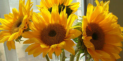 Photograph - 3 Sunflowers by Kathryn Donatelli