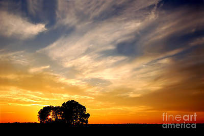 Fresh Photograph - Sunset And Trees by Michal Bednarek