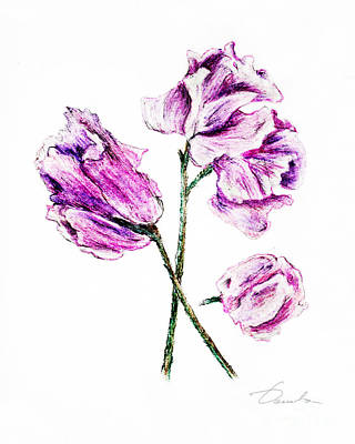 Sweet Pea Art Print by Danuta Bennett