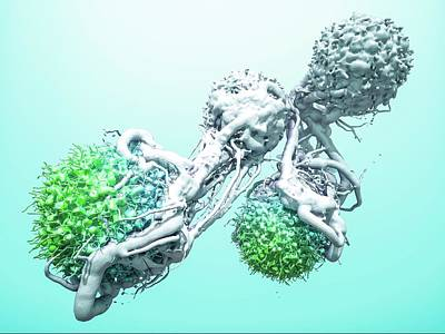 T Cells Attacking Cancer Cells Art Print