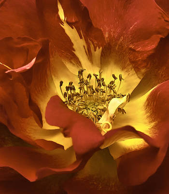 Art Print featuring the photograph the Heart Of A Rose by Nancy Marie Ricketts