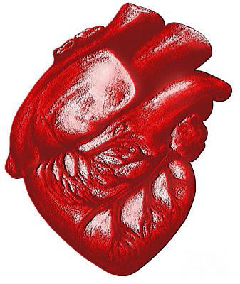 The Human Heart Art Print by Dennis Potokar