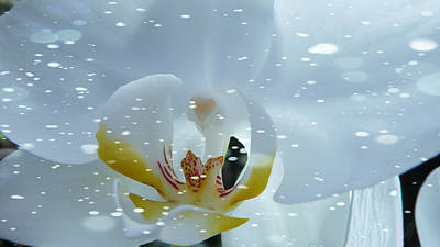 Digital Art - The Orchids With Snow by Xueyin Chen