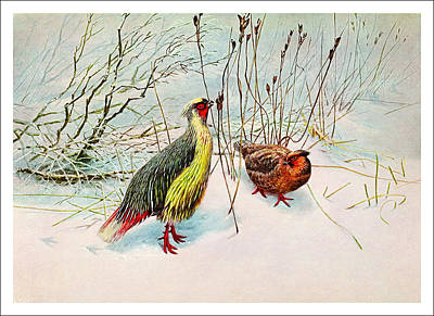 Birding Painting - The Pheasands by Celestial Images