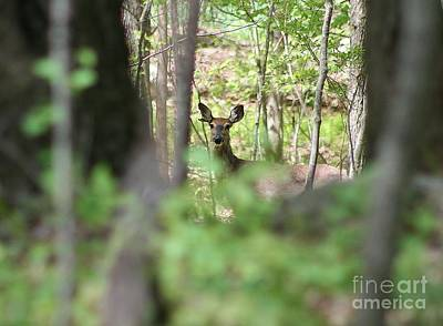 Travel - Through The Trees by Neal Eslinger